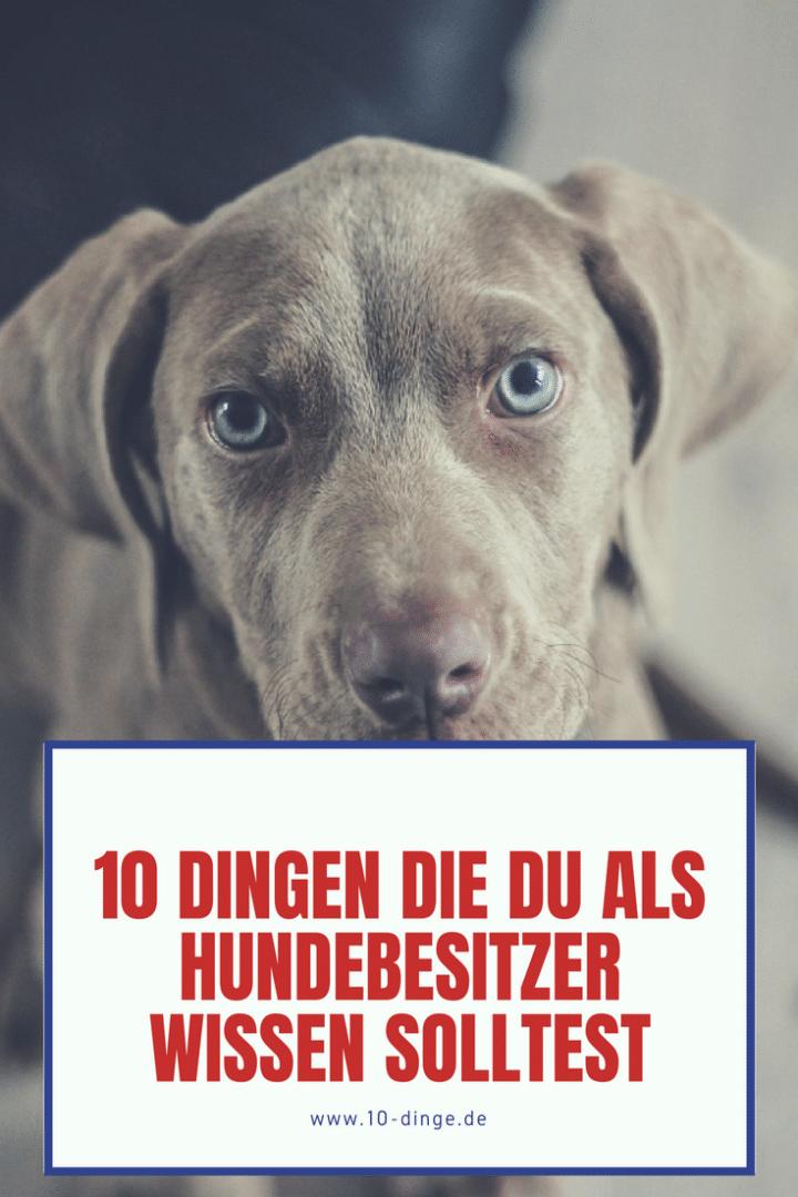 10 Dinge, die du als Hundebesitzer wissen solltest