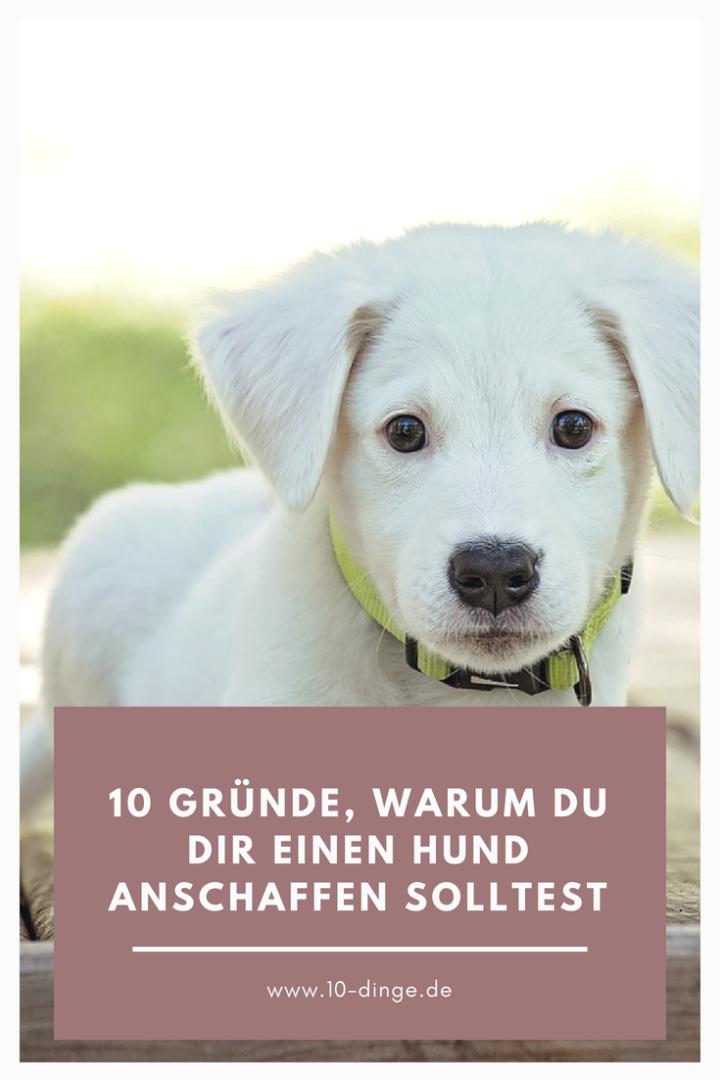 10 Gründe, warum du dir einen Hund anschaffen solltest