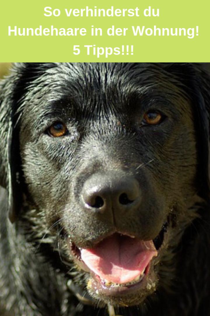 So machst du Schluss mit Hundehaaren in der Wohnung – 5 Tipps