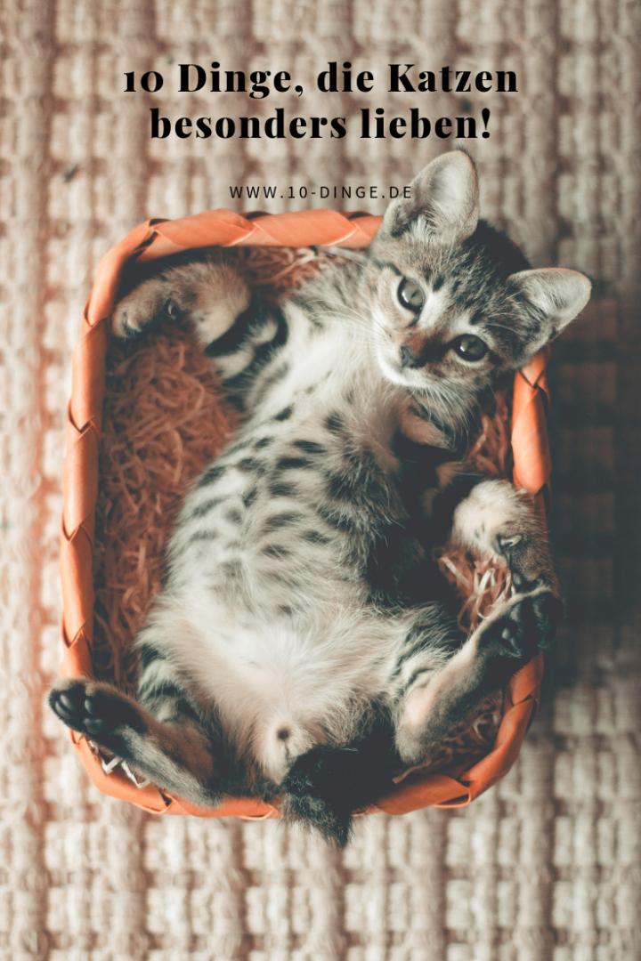 10 Dinge, die Katzen besonders lieben!