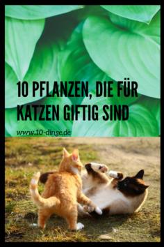 10 Pflanzen, die für Katzen giftig sind