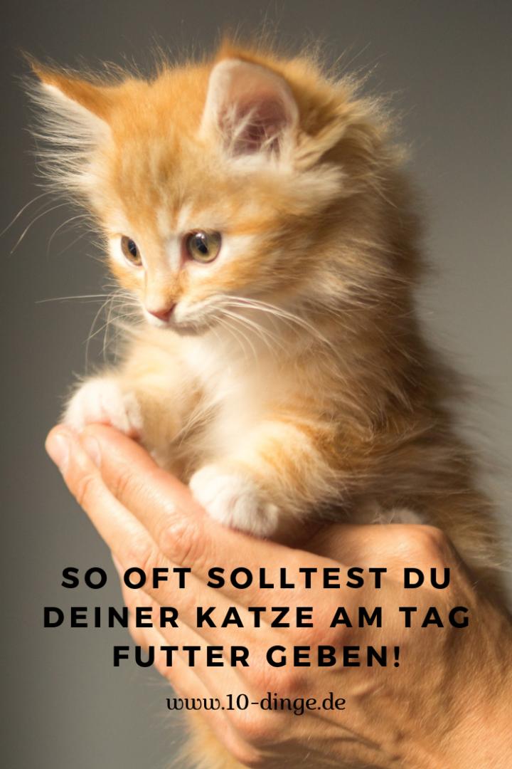 So oft solltest du Deiner Katze am Tag Futter geben!