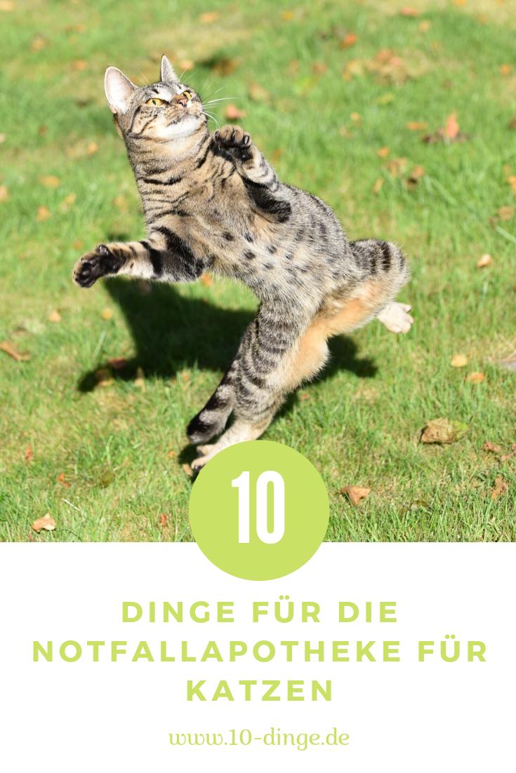 10 Dinge für die Notfallapotheke für Katzen