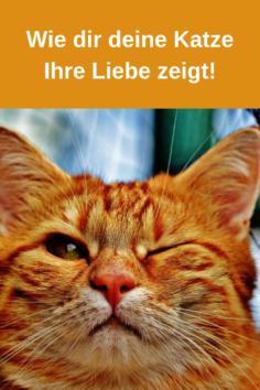 So zeigt Dir Deine Katze ihre Liebe