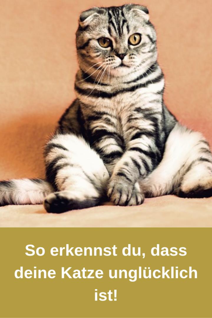10 Anzeichen, an denen Du erkennst, dass Deine Katze unglücklich ist!