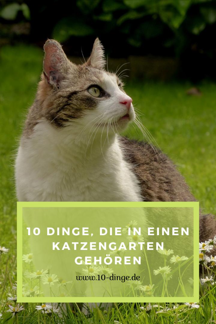 10 Dinge, die in einen Katzengarten gehören