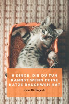 6 Tipps, was Du tun kannst wenn Deine Katze Bauchweh hat