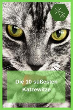 Die 10 süßesten Katzewitze